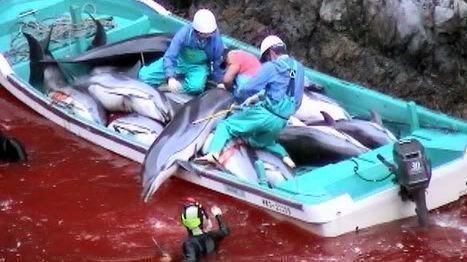 Should surfers boycott the 2020 Olympics in Japan over Taiji and whale hunting?