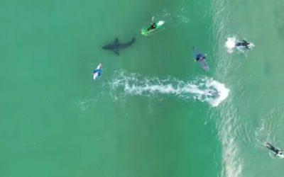 What Lies Beneath: Sharks!