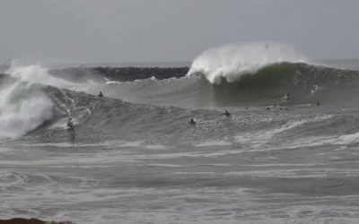The Wedge: Raw