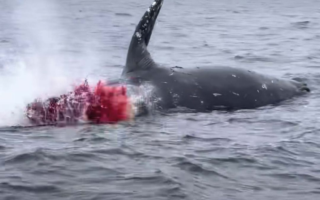 Exploding whale, you've been warned.