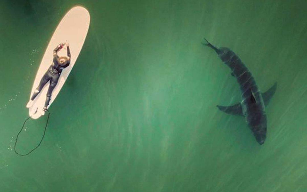 Shark fun!