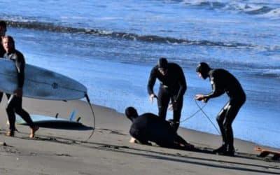 Shark Attacks Surfer